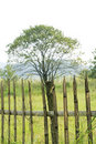 Free Tree With Fencing Stock Photography - 6419982