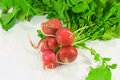 Free Red Radish Isolated Stock Photo - 6504210