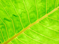 Free Close Up Of Leaf Stock Image - 6543721