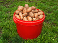Free Bucket Of Potatoe Stock Photo - 6553020