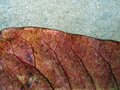 Free Autumn Leaf Detail Royalty Free Stock Photos - 664398