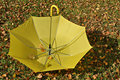 Free Yellow Umbrella Royalty Free Stock Photos - 6708498