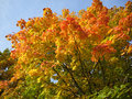 Free Wonderful Colors Of The Autumn Royalty Free Stock Photo - 6875635