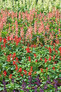 Free Colorful Flowerbed 2 Royalty Free Stock Image - 73376