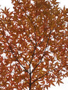 Free Autumn Twig Royalty Free Stock Photography - 7012467
