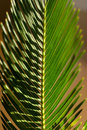 Free Close Up Frond Royalty Free Stock Photography - 7702857