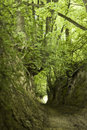 Free Green  Ravine Stock Photo - 7740550