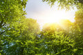 Free Sunshine In Forest Stock Photography - 7772742