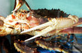 Free Crab Royalty Free Stock Image - 799056