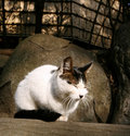 Free Cat Enjoy Sunshine Stock Photography - 8056222