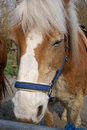 Free Horse Brown Head Stock Images - 821614