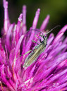 Free SMall Beetle On Thistle Royalty Free Stock Photos - 8384868