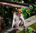 Free Cynomolgus Monkey Stock Photos - 8407513