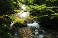 Free Rivulet In The Forest In ZhangjiaJie National Park Stock Photography - 8411082
