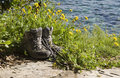 Free Hiking Boots Royalty Free Stock Photos - 8412498