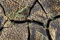 Free Craked Mud By Drought And Strands Stock Images - 8465984