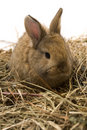 Free Small Rabbit Stock Photography - 8510952