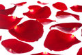 Free Red Rose Petals Royalty Free Stock Photo - 8882655