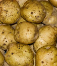 Free Potatoes 1 Royalty Free Stock Images - 8976199