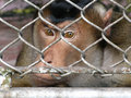 Free Monkey Stock Photography - 8985012