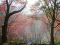 Free Morning Autumn Leaves Royalty Free Stock Images - 9029039