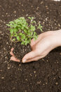 Free Hand Holding Small Tree Stock Image - 9038011