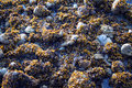 Free Stones And Seaweed Stock Images - 926324