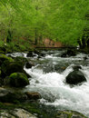 Free River In The Mountain Stock Photos - 9290243