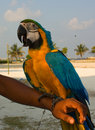 Free Parrot On The Hand Royalty Free Stock Images - 9361499