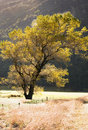Free Backlit Autumn Tree Royalty Free Stock Images - 9369029