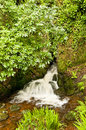 Free Waterfall With Trees Stock Image - 9403461