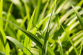 Free Green Grass Stock Image - 9457021