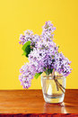 Free Lilacs Royalty Free Stock Photo - 9472675
