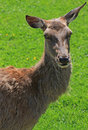 Free Deer Animal Head Close-up Stock Photos - 9644823