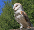 Free Owl Bird Animal Stock Image - 9650921