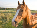Free Horse Head Royalty Free Stock Photography - 9663267