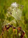 Free Spiders Cobweb On A Meadow At Sunrise Stock Photo - 9807140