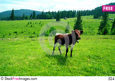 Free Happy Cow Stock Images - 524