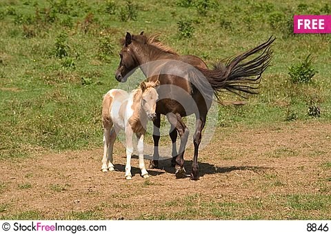 Free Mare With Colt Royalty Free Stock Image - 8846
