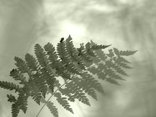 Free Fern Royalty Free Stock Image - 1526
