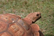 Free Big Tortoise Stock Photo - 1690