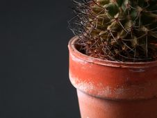 Free Cactus Closeup Royalty Free Stock Images - 3399