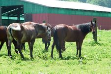 Free Horses In Pasture Royalty Free Stock Photos - 3458