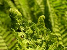 Free Fern Growth II Stock Images - 4114