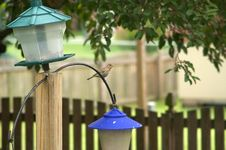Free Sparrow And Feeders Stock Images - 4374