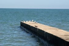 Free Concrete Breakwater Stock Images - 4764