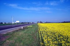 Free Golden Canola Field Stock Photography - 512