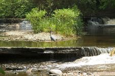 Free Heron On Ledge Of Waterfall Stock Photo - 5440