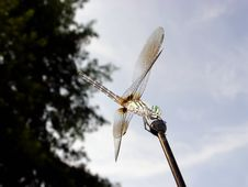Free Dragonfly Royalty Free Stock Photography - 6337