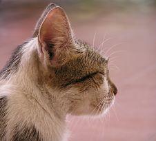 Free Sleepy Cat Stock Photo - 8420